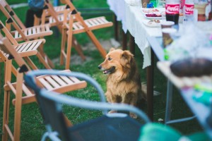 electrical safety for your summer garden party